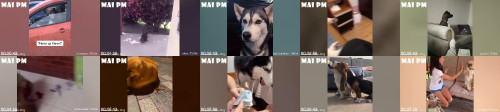 aae6c21453795d91286a19ed0f2f278a - You Will Have Tears In Your Eyes From Laughing  The Funniest Dogs Compilation 2020